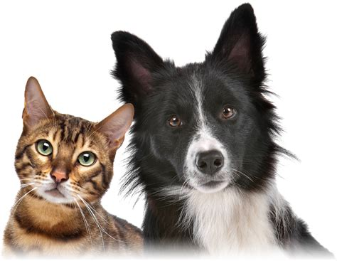 Cat And Dog Pet Insurance Cat Horse And Dog Insurance Mse