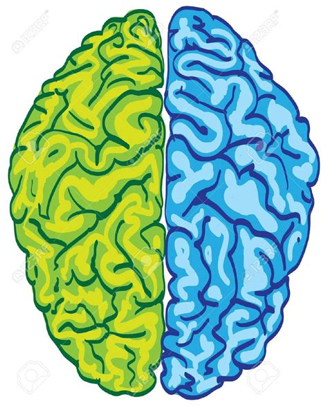 clipart royalty free best brain clipart 6095 clipartion