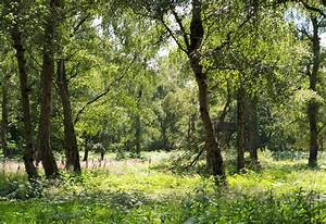 Foret De Sherwood : la for t de sherwood et autres aventures miles away ~ Voncanada.com Idées de Décoration