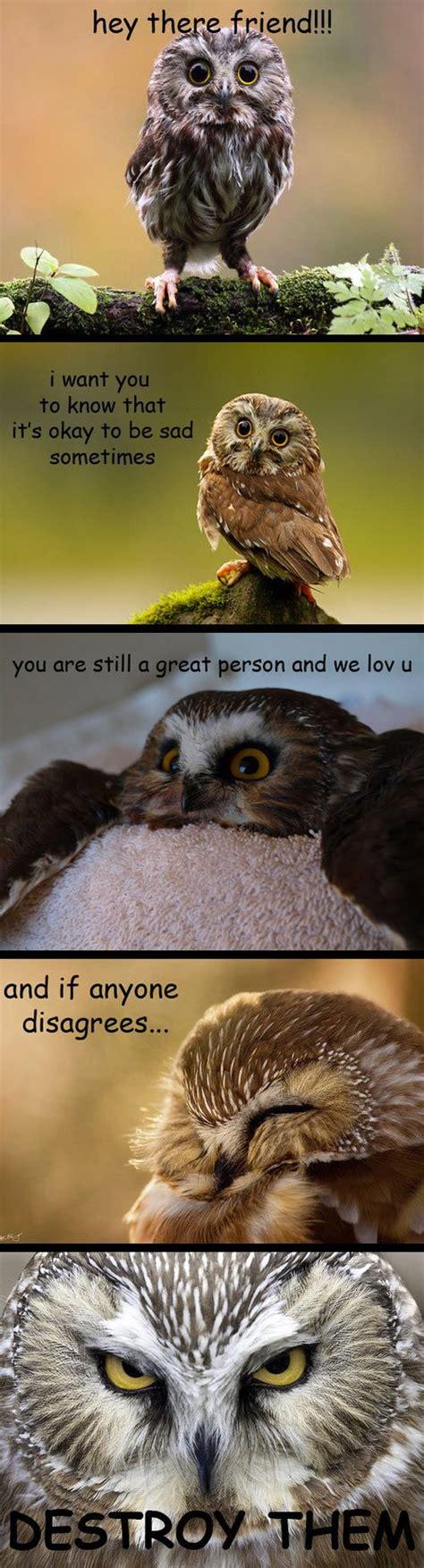 Meme Owl - owl on drugs quotes quotesgram
