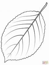 Coloring Tree Leaf Cherry Wild Redwood Giant Sequoia Template Printable Cedar Dot Leaves Trees Drawing Supercoloring sketch template
