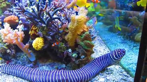 sea reef aquarium iconic attraction in the kovalam india travel