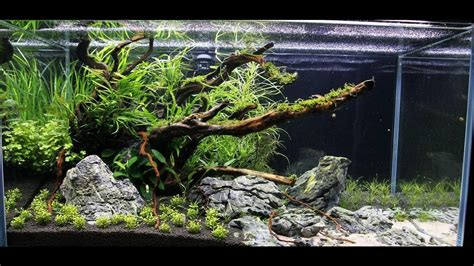 ada aquascape ada 90p quot rocky shore quot aquascape after maintenance