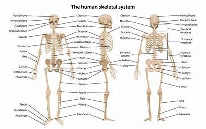 Human Vocabulary Anatomy English Leg Vocab Head
