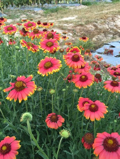ปักพินโดย สถิต ใน ดอกไม้สวยๆๆ