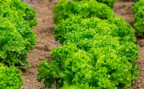 JBT Corporation acquires Dutch food equipment provider ...