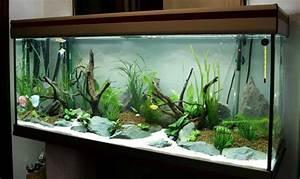 Aquarium Einrichten Beispiele : aquarium ideen 108 designs zum integrieren in der wohnung ~ Frokenaadalensverden.com Haus und Dekorationen