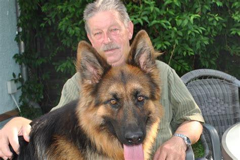 altdeutsche schaeferhund welpen gerader ruecken
