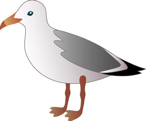 Seagull Clipart Seagull Free Clip