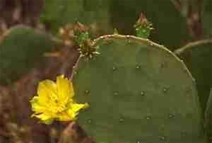 Comment Entretenir Un Cactus : le cactus nos conseils malins pour les cultiver et ~ Nature-et-papiers.com Idées de Décoration