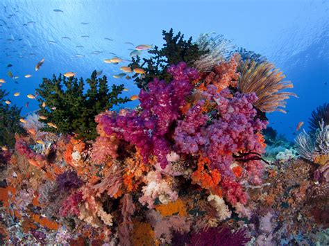 coral reef color raja at underwater coral reefs with beautiful colors of