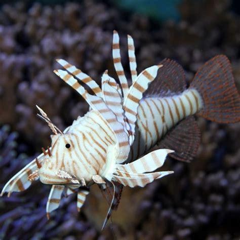 faux poisson pour aquarium faux poisson aquarium