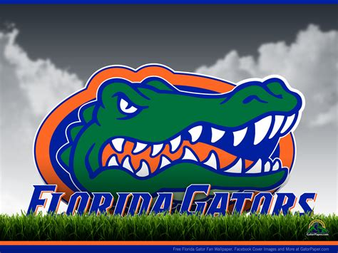 Gator Wallpaper For Iphone Florida Gators Wallpaper And Screensavers Wallpapersafari