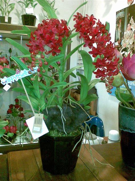 ดอกไม้ประดิษฐ์จากดินญี่ปุ่น ดินไทย
