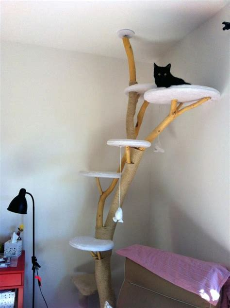 Katze Kletterwand Selber Bauen