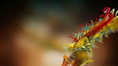 Amazing Wallpapers 3d Micro Plant Desktop Background