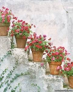 die besten 17 bilder zu blumen und garten auf pinterest With französischer balkon mit die schönsten englischen gärten