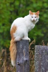 Katzen Garten Vertreiben : katzen vertreiben erfolgreiche mittel zur katzenabwehr ~ Michelbontemps.com Haus und Dekorationen