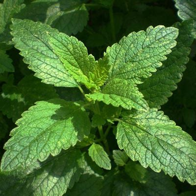Pflanzen Für Katzen Geeignet by Ungiftige Pflanzen F 252 R Katzen Diese Arten D 252 Rfen Sogar