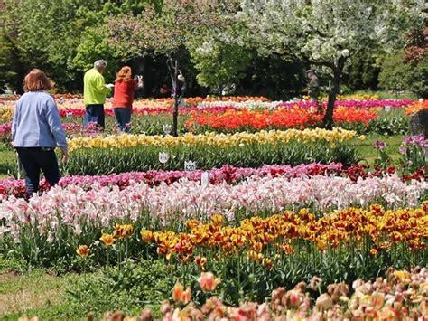 Veldheer Tulip Garden by Veldheer Tulip Gardens Org