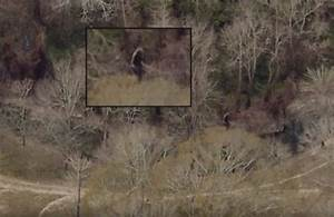 Bigfoot Evidence: Rougarou, Louisiana's Dogman, Captured ...
