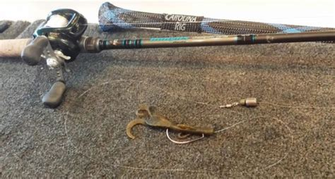 ultimate guide  carolina rig fishing tackle scout