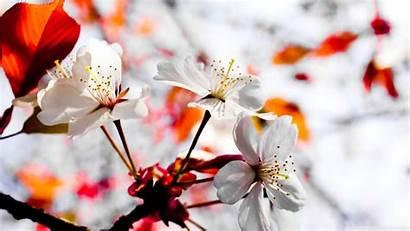Flowers Spring Season Desktop Wallpapers Background Scenes