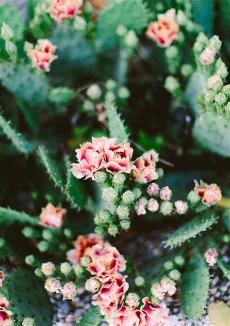 images  cactus  pinterest agaves pears