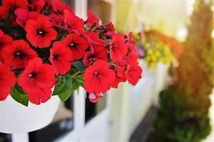 Kunstblumen Für Balkon : k nstliche balkonpflanzen ~ A.2002-acura-tl-radio.info Haus und Dekorationen