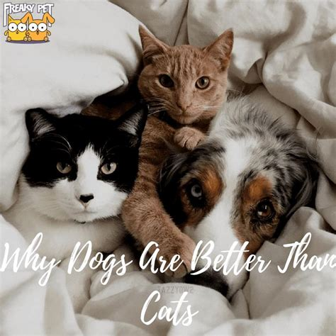 better than why dogs cats owner cat willing tell across might many come