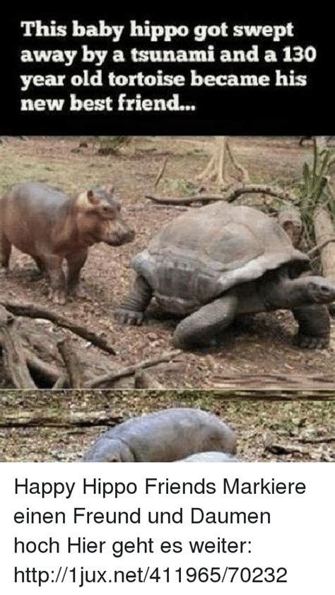 Baby Hippo Meme - this baby hippo got swept away by a tsunami and a 13 year old tortoise became his new best