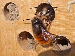 Tiere Im Insektenhotel : tiere im glemstal bei schwieberdingen ~ Whattoseeinmadrid.com Haus und Dekorationen