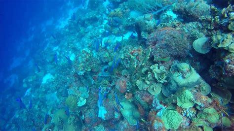 curacao scuba diving april  youtube