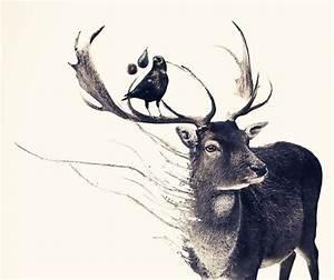 via deer art tumblr com   Handmade   Pinterest   Deer art ...