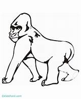 Gorilla Coloring Pages Ape Draw Clipart Silverback Drawings Funny Animals Fran Getcoloringpages Popular Library Coloringhome sketch template