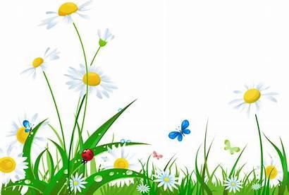 Clipart Summer Grass Flowers Clip Daisy Flower
