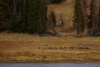Forest Service Wildlife