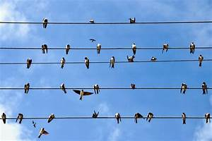 Why Don U0026 39 T Birds Sitting On Overhead Wires Get Electrocuted