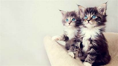 Cat Wallpapers Phone Couple