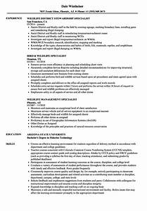 information management specialist sample resume word list With wildlife management plan template