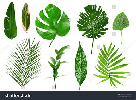 Different Tropical Leaves On White Background Stock Photo