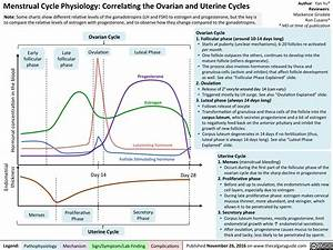 Menstrual Cycle Physiology  Correlating The Ovarian And
