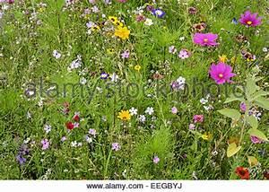 Lichterkette Außen Sommer : bunte blumenwiese im sommer bunte blumenwiese im sommer au en wildblumen wildblumen wiesen ~ Orissabook.com Haus und Dekorationen