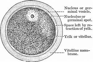 Diagram Showing Parts Of A Cell