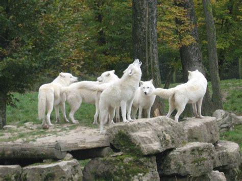 forum quebec voir le sujet les amoureux des animaux