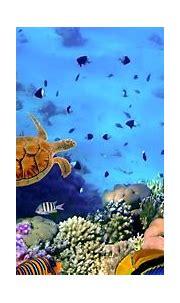 Underwater Wallpapers HD PixelsTalk.Net   43 Phone Wallpaper