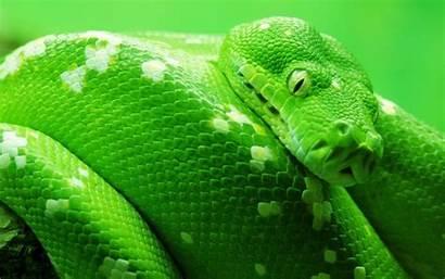 Snake Anaconda Snakes Serpent Wallpapers13 Animals Boa