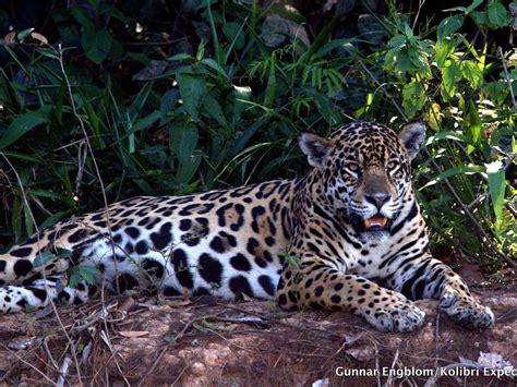 Pantanal Birding Jaguar Safair in Brazil