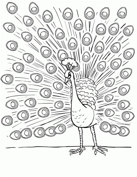 printable peacock coloring pages  kids