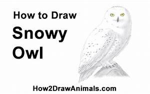 Snow Owl Diagram
